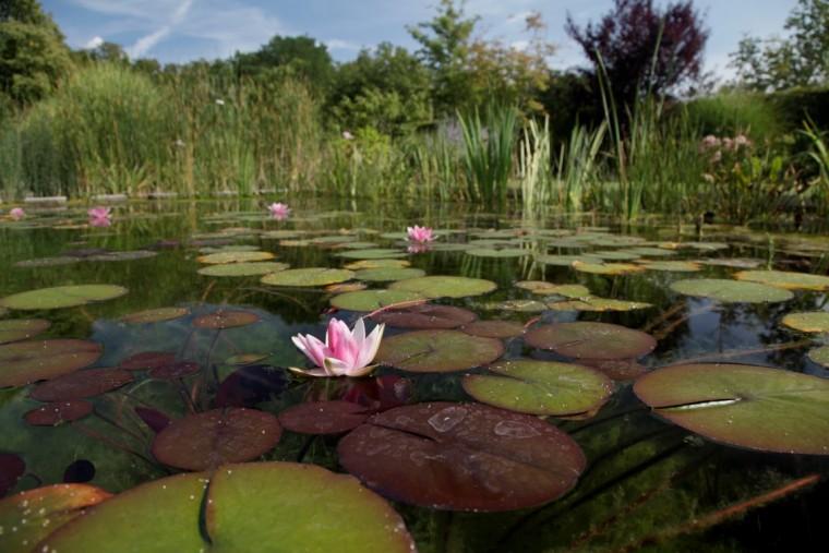 Swimming Teich / Living Pool Infotag