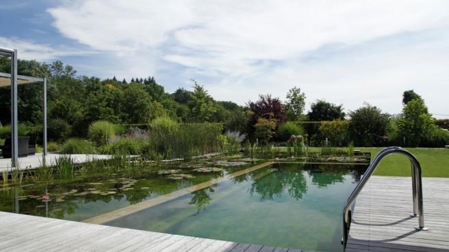Anspruchsvoller Wassergarten für Hund mit Herrchen